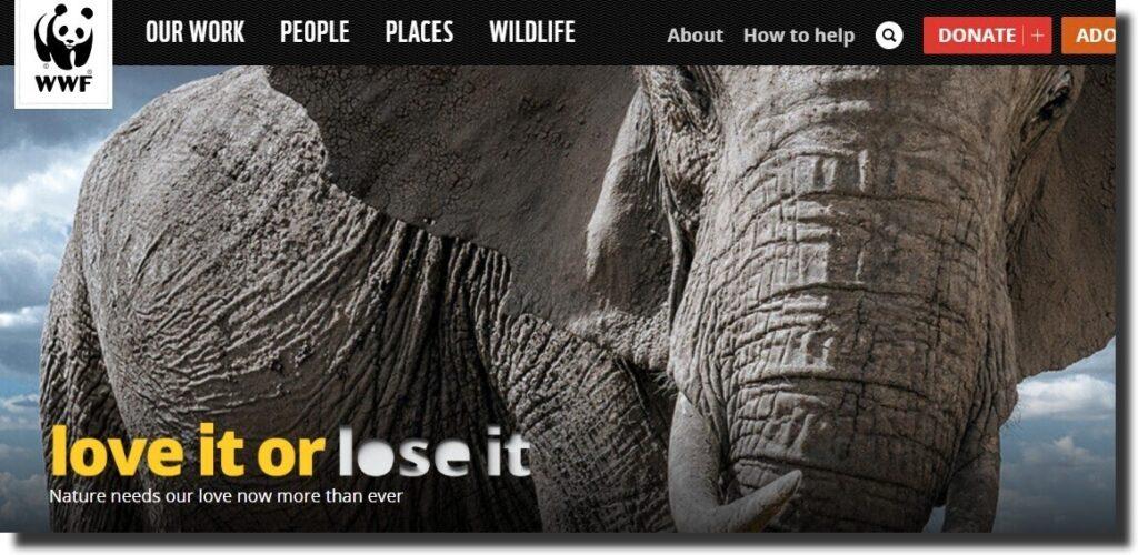 World Wildlife Nonprofit Website